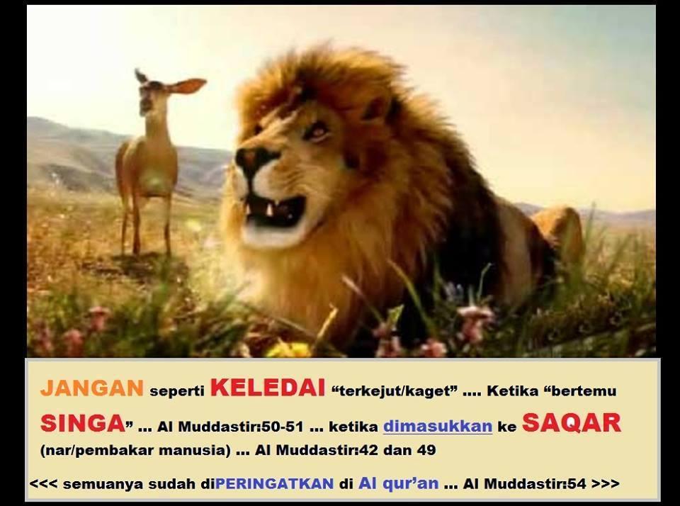 keledai singa saqar