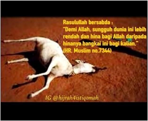 bangkai kambing 2