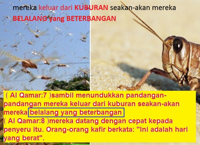 belalang terbang