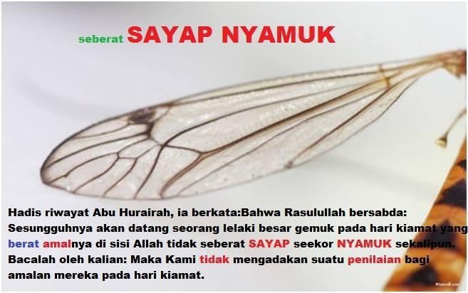 sayap nyamuk 1
