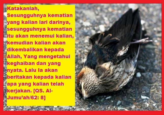 burung bird mati