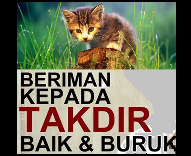 kucing baik buruk
