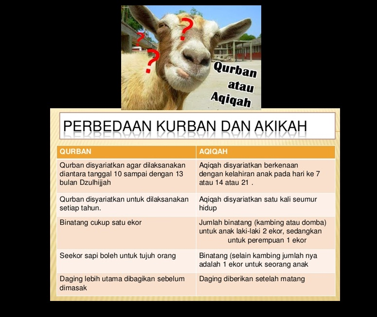 perbedaan qurban aqiqah