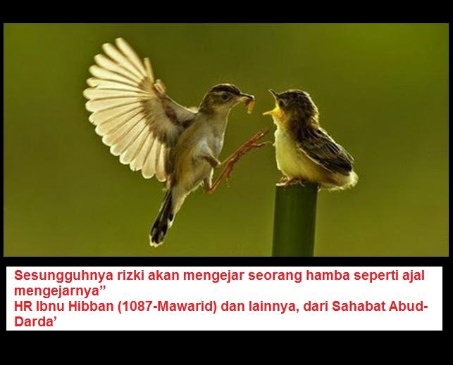 rezeki mengejar burung